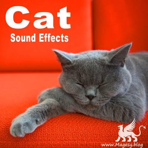 Cat Sound Effects FLAC