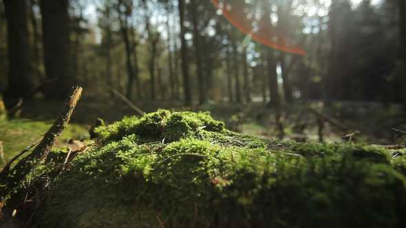 Vj Footages Forest   Stock Footage | Images From Magesy® R Evolution™