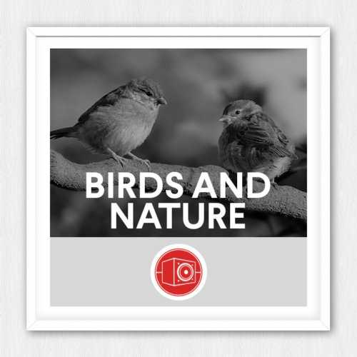 Birds and Nature WAV | Images From Magesy® R Evolution™