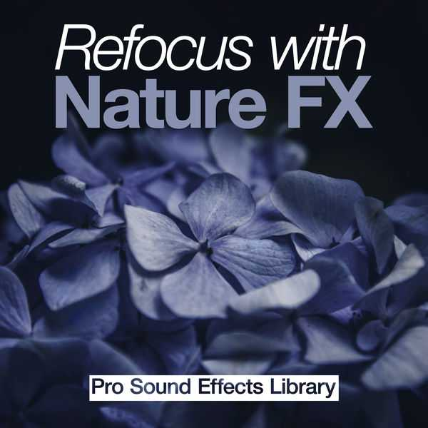 Refocus with Nature FX WAV | Images From Magesy® R Evolution™