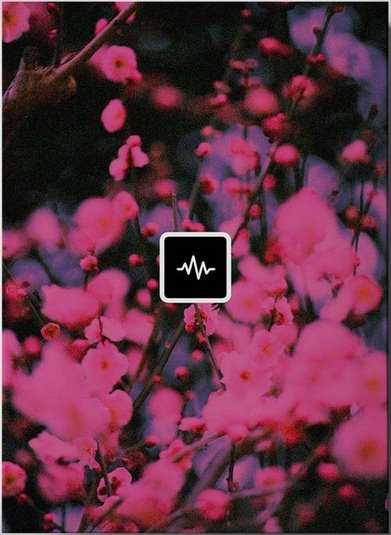 Blossom Loop Kit WAV   Images From Magesy® R Evolution™